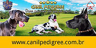 Canil Pedigree